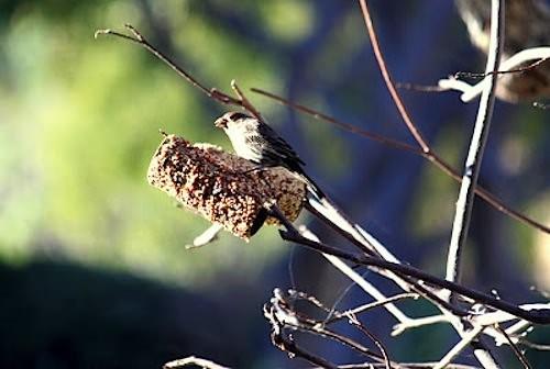 tp birdseed feeder