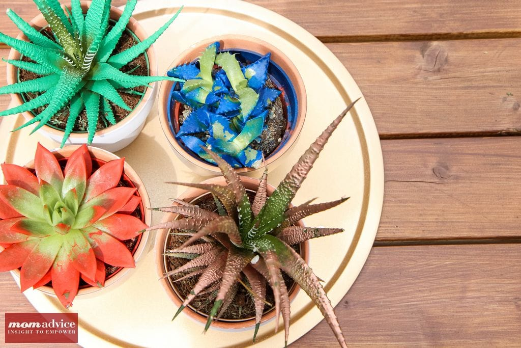 How to Make a Succulent Centerpiece from MomAdvice.com