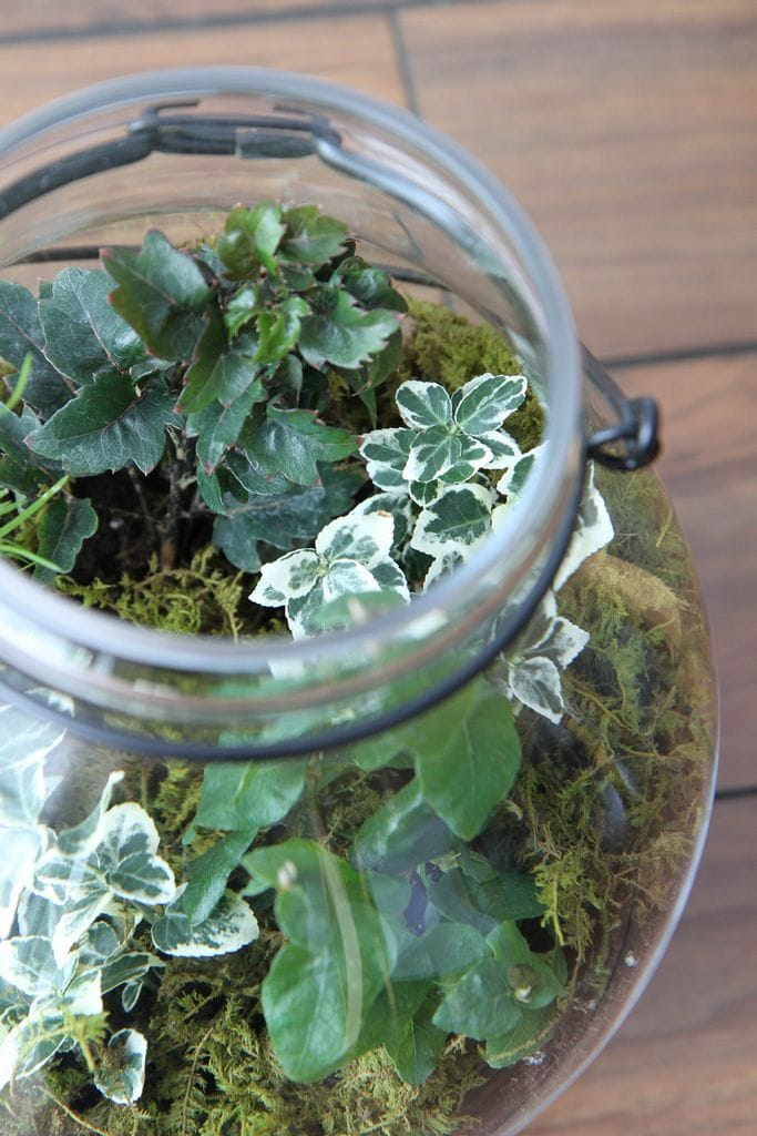 How_To_Make_Terrariums