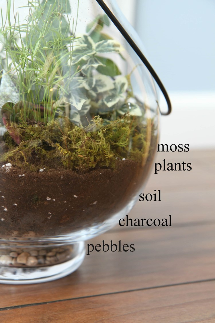 How_To_Make_Terrariums_Collage