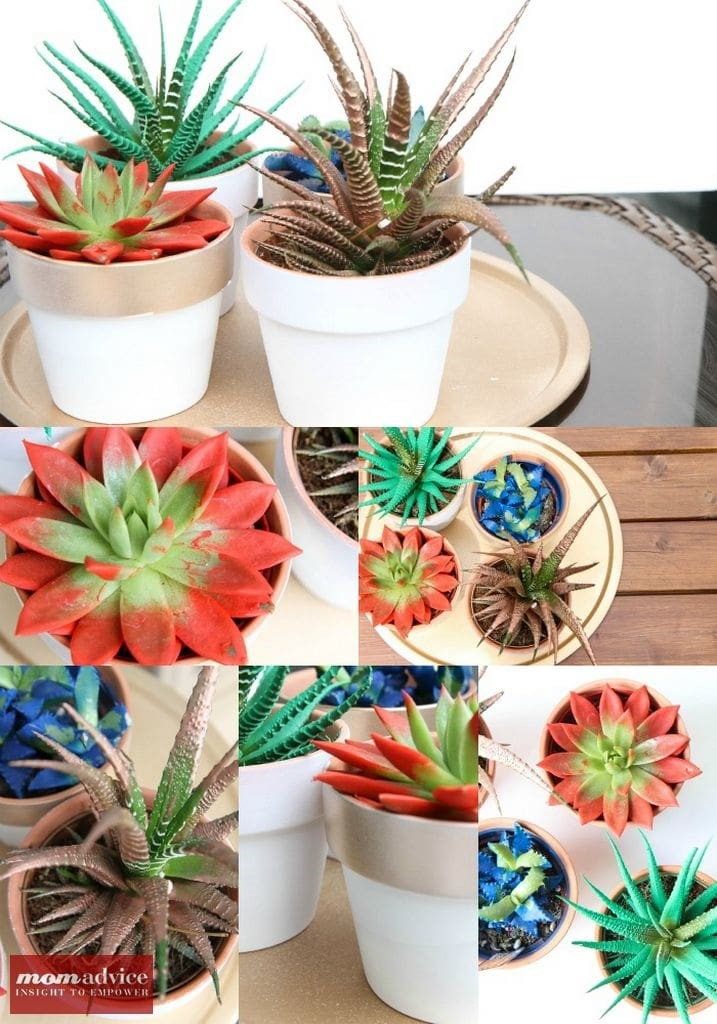 Painted Succulent Pictures