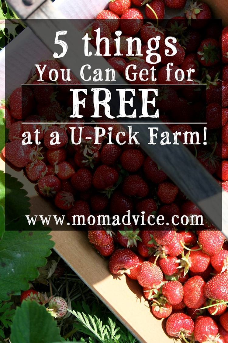 5 Things You Can Get for FREE at a U-Pick Farm! | momadvice.com