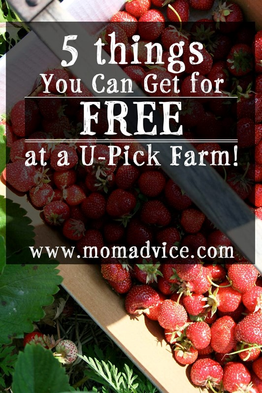 5 Things You Can Get for FREE at a U-Pick Farm!