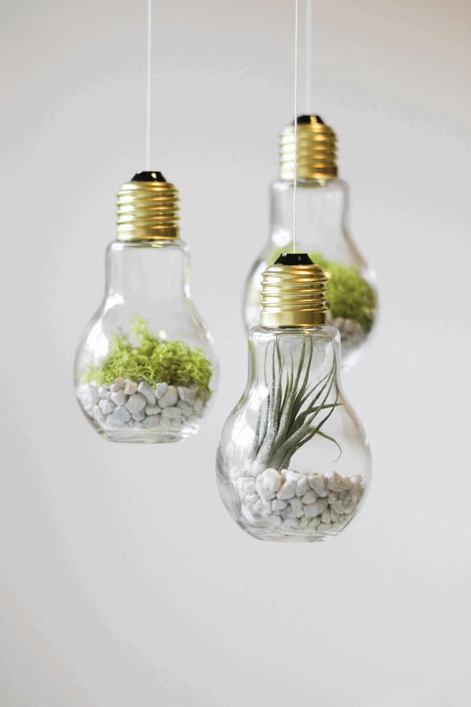 DIY Lightbulb Terrariums via CladandCloth