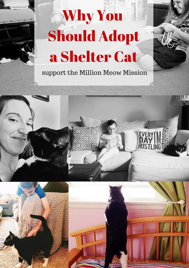 Why You Should Adopt a Shelter Cat from MomAdvice.com