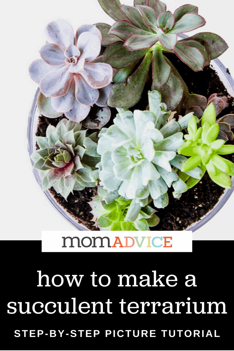 How To Make A Succulent Terrarium Momadvice