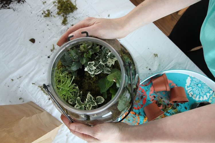 How_To_Make_Terrariums-17