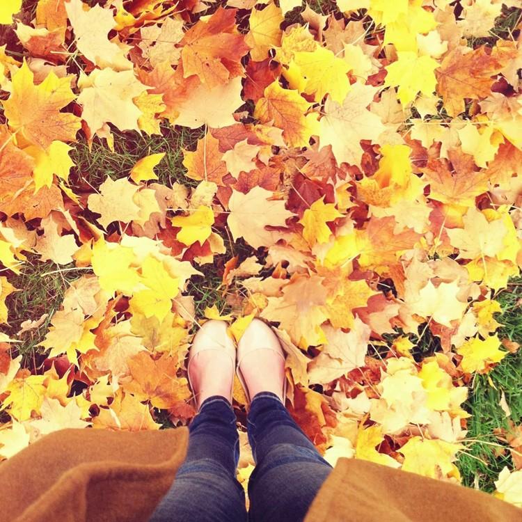 fall_banner_6