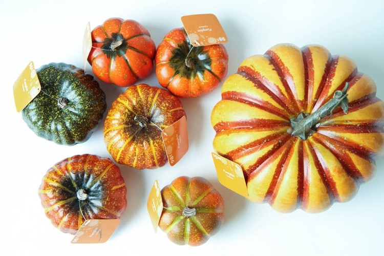 Painting Pumpkins With Acrylic Paints with MomAdvice.com