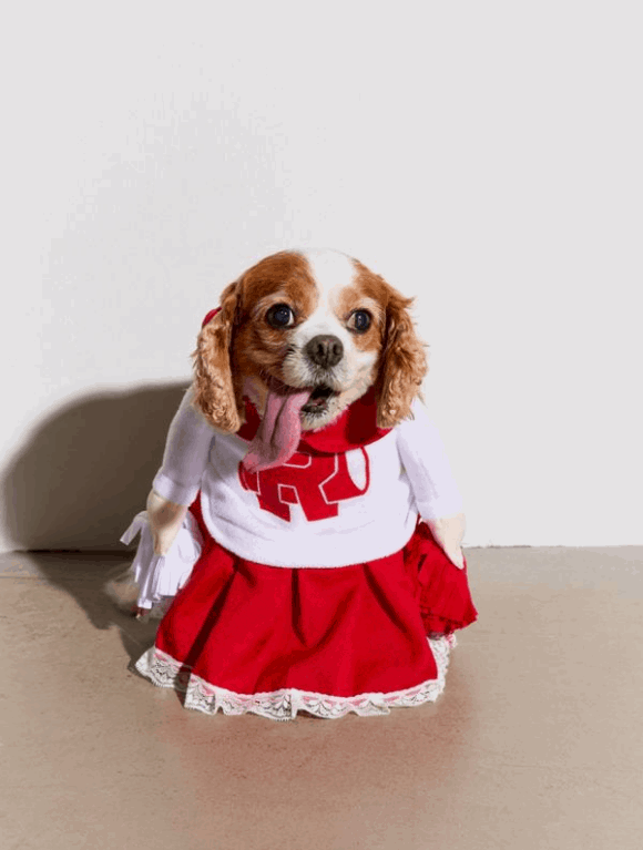 cheerleader pet costume